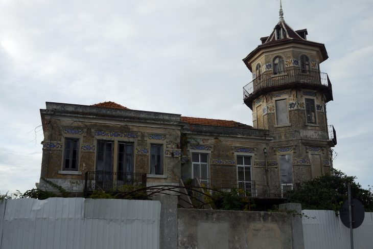 Urban Animals Finding Flamingos Abandoned Villa in Samouco