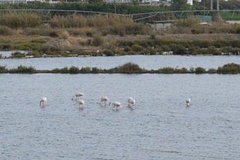 Urban Animals Finding Flamingos Thumbnail