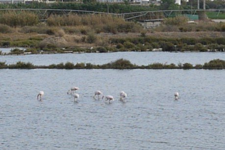 Urban Animals Finding Flamingos Thumbnail