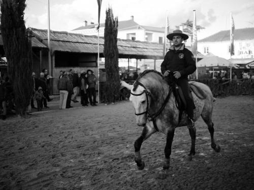 Golegã's National Horse Fair 6