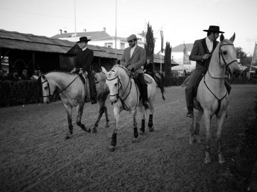 Golegã's National Horse Fair 8
