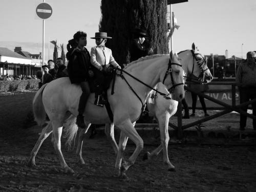 Golegã's National Horse Fair 11