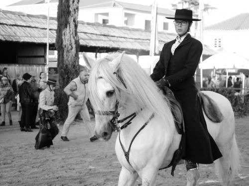 Golegã's National Horse Fair 12