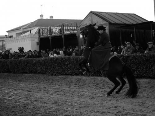 Golegã's National Horse Fair 14