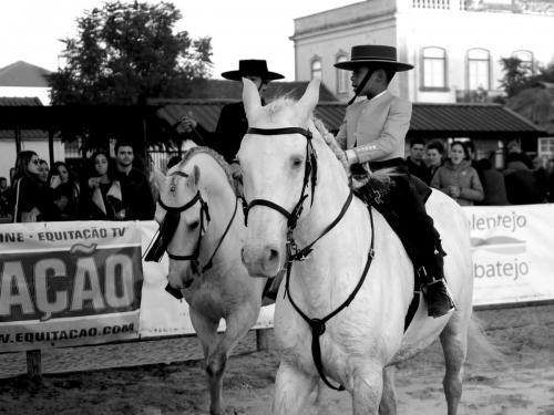 Golegã's National Horse Fair 15